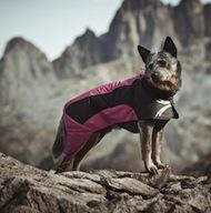Hundkläder online rea