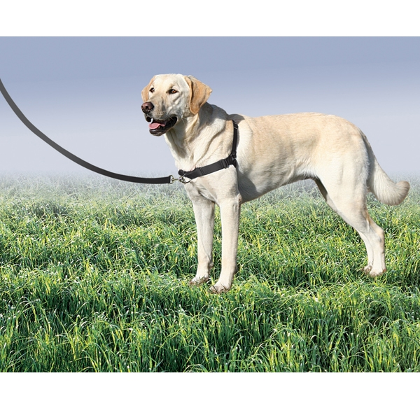 escort stochkolm värmedyna hund
