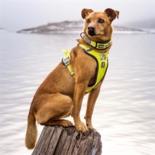 hurtta_weekend_warrior_harness_collar_7