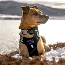 hurtta_weekend_warrior_harness_collar_8