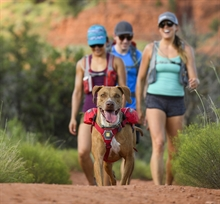 ruffwear_singletrak_pack_red_currant_klovjevaska_4